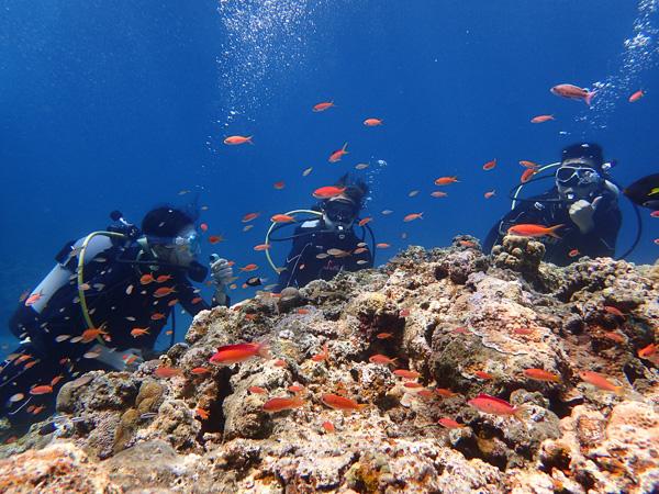 気持ちいい水の中☆体験ダイビング&ファンダイビング