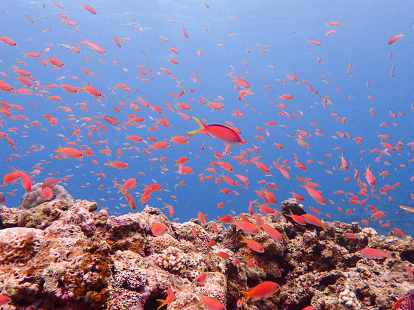 Fun Dives, Discover Scuba Dives and Snorkeling☆