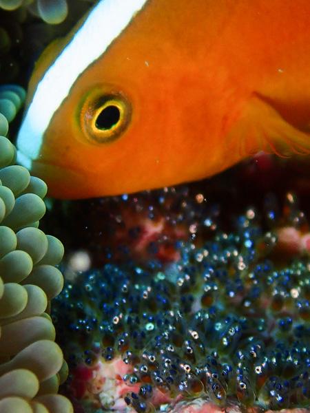 Discover Scuba Dives, Fun Dives, Looking for Mantas
