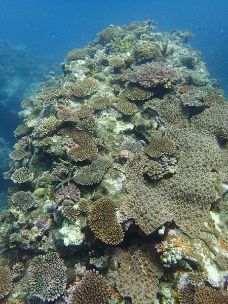 Discover Scuba Dives☆