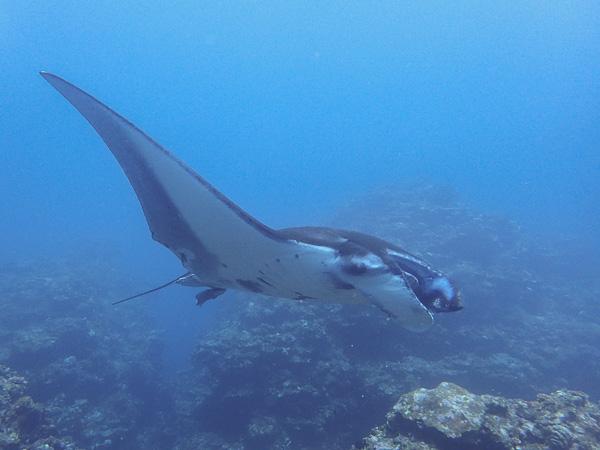 今日の海からカメもマンタも小さな生き物たちも~\(^o^)/
