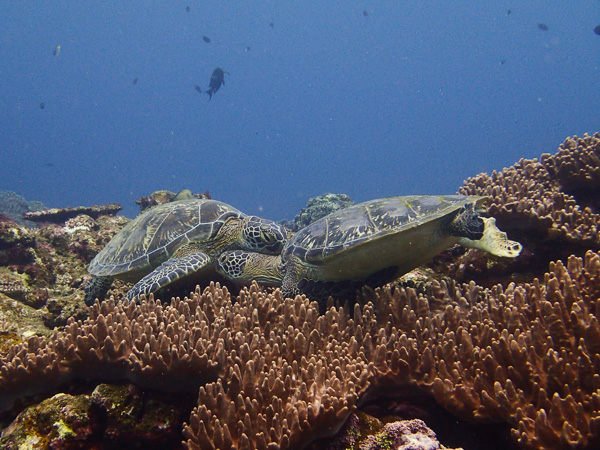 Turtle Drama… You're in My Spot!