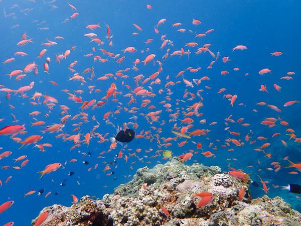 Discover Scuba Dives with Manta Rays in Ishigaki island