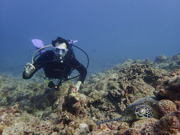 Both Sharks and Turtles! Discover Scuba Dives☆