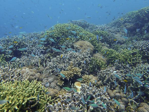 Diving in Nagura Bay