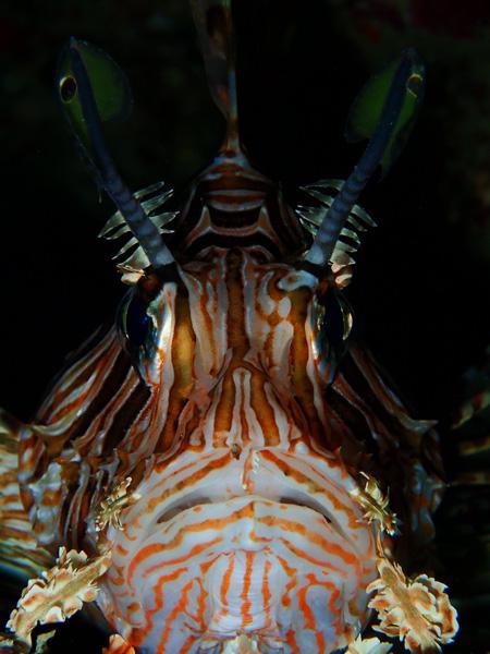 ウミガメ!コブシメ!!そしてサンゴに癒される