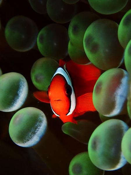 July 11 Discover Scuba Dives