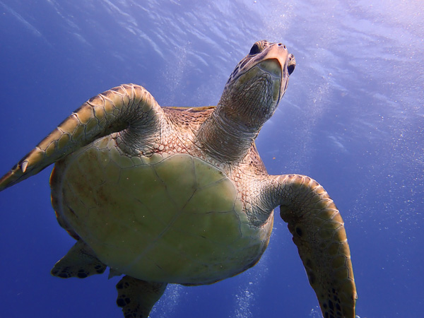 Too Close! Very Curious Turtle on Today's Discover Scuba Dives