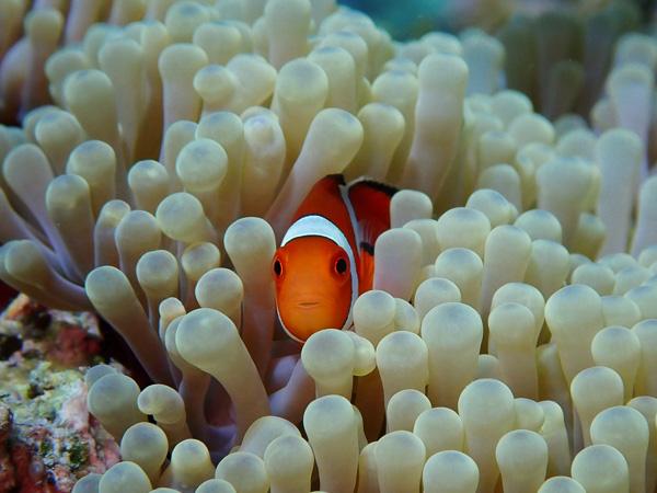 Calm Dives in Summery Ishigaki