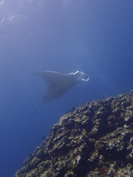 体験ダイビングでマンタにカメに!