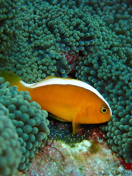 Discover Scuba and Fun Dives