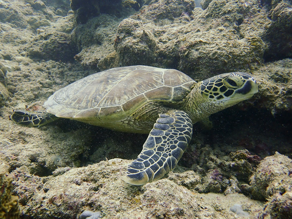 Discover Scuba Dives with Turtles