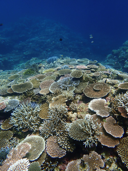 Fun Dives among the corals