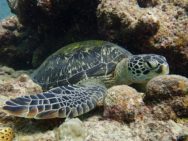Discover scuba dives with sea turtles