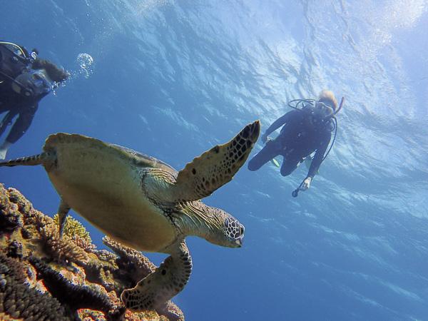 Open water dives in the ocean